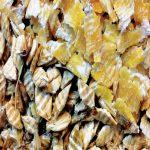 super-starter-flakesشرکت دام گستر رادپاسارگاد